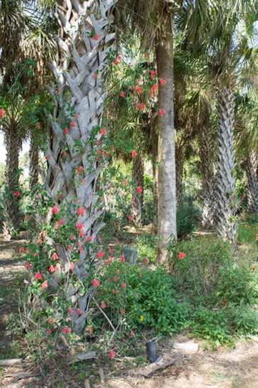 Fleurs et palmiers - Naples Botanical Garden - Floride