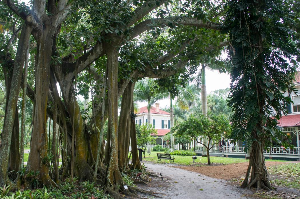 Les deux maisons - Fort Myers, Floride - arbres