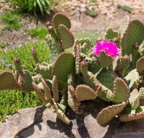 Cactus - New Mexico