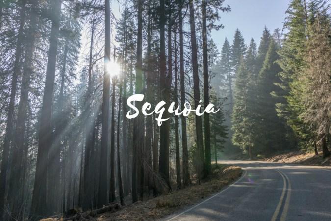 Sequoia California