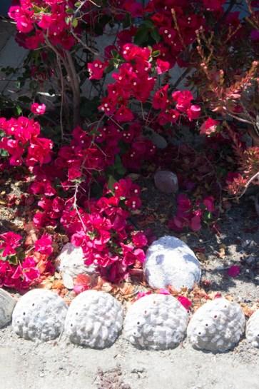 Jolies fleurs et coquillages - Monterey Californie