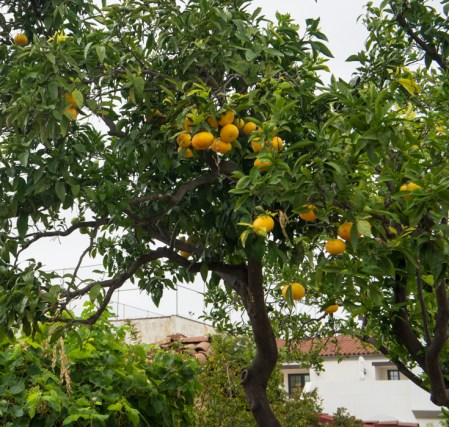 Santa Barbara Californie les oranges