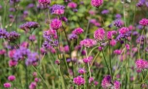 Botanical Garden - Denver Colorado-26