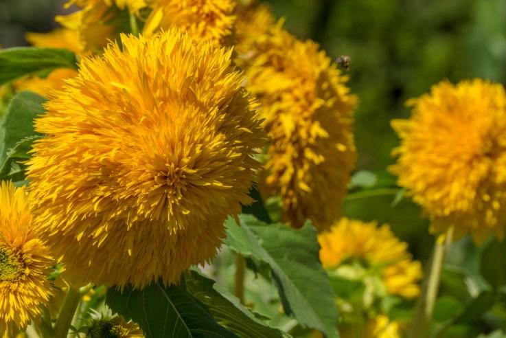 Botanical Garden - Denver Colorado-27