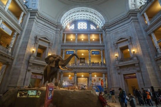 washington-dc natural history museum éléphant