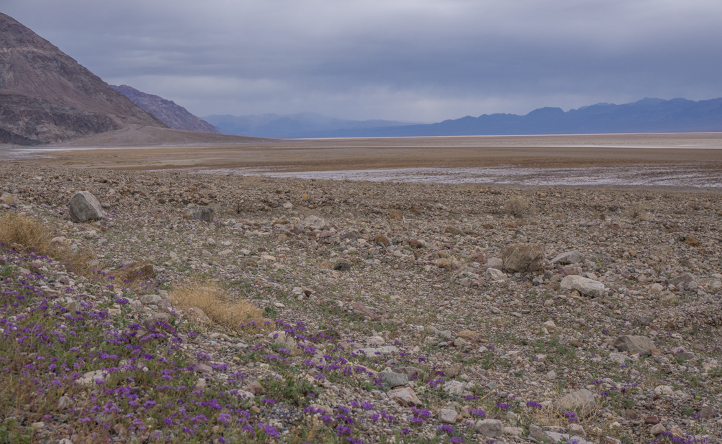 death valley california - les petites fleurs