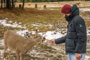 parc omega - feeding the animals