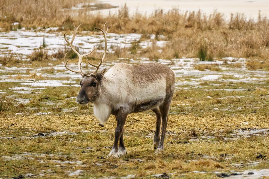 parc omega - caribou| www.maathiildee.com