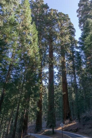 sequoia national park californie-1