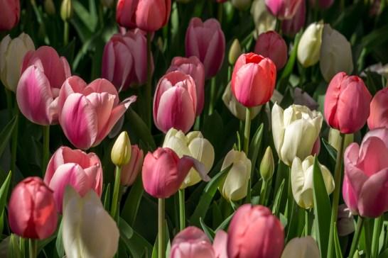 Printemps Boston floraison-15