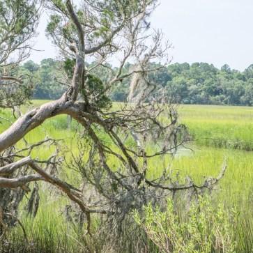 Le parc historique de Wormsloe Savannah Georgie-5