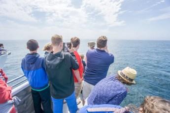 Voir les baleines a Boston-4