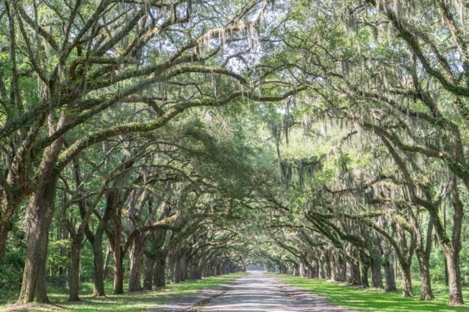 Wormsloe Savannah - l'allée des chenes