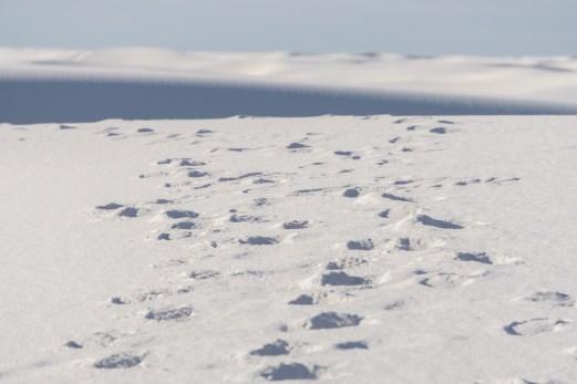 White sands dune nouveau mexique-13