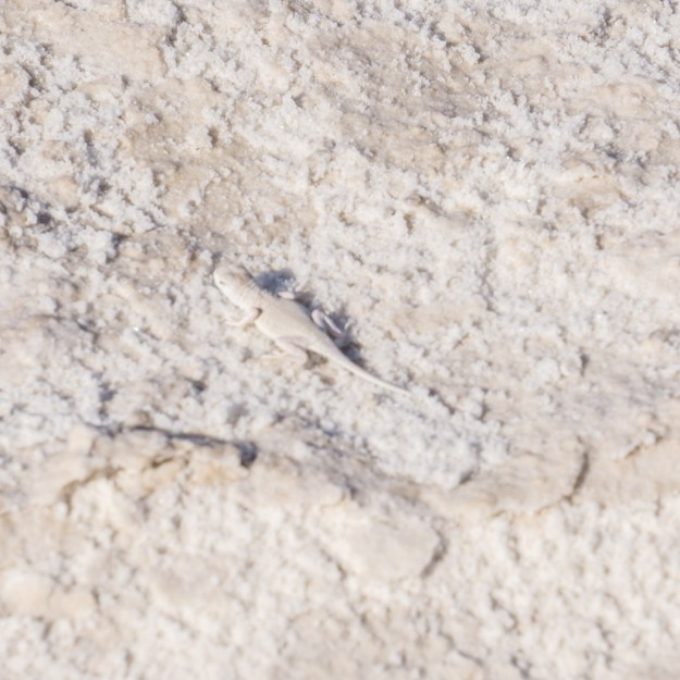 White sands dune nouveau mexique-22