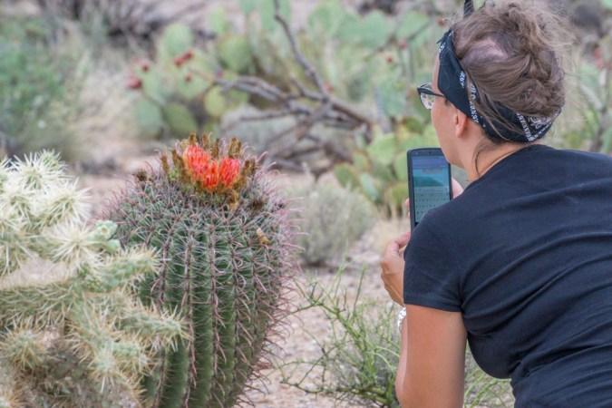 snapchat cactus