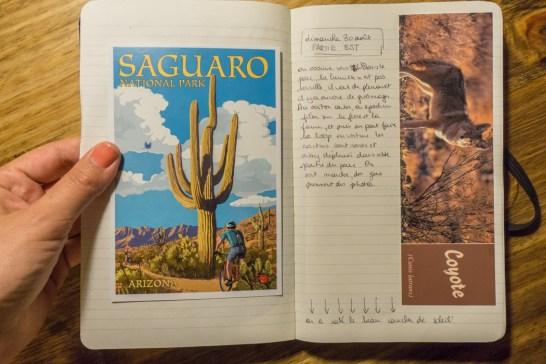 Saguaro Cactus Arizona - carnet de voyage1