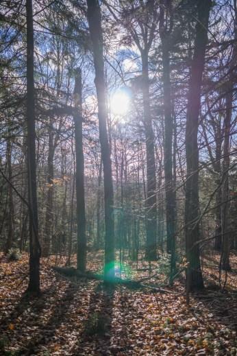 Vermont New England-8