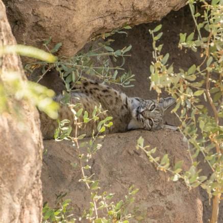 Tucson Arizona chat