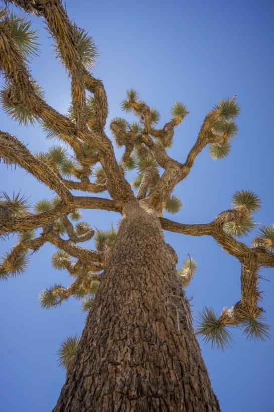 Joshua Tree Park California-9