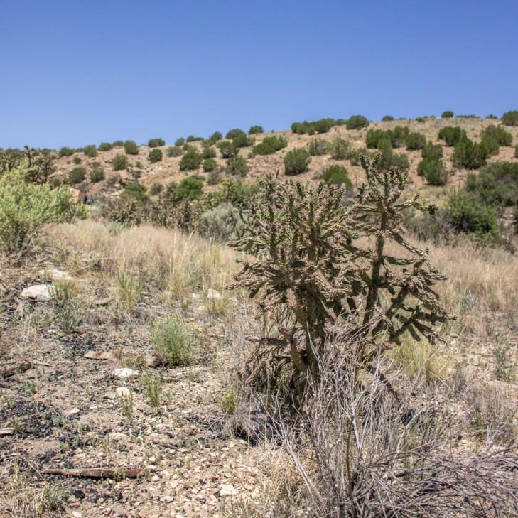LA route de la turquoise nouveau mexique cactus