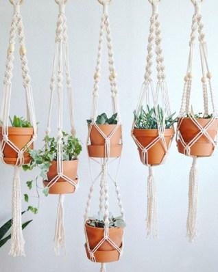 plants thejungalow 1