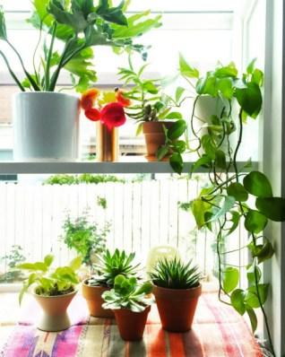 plants thejungalow