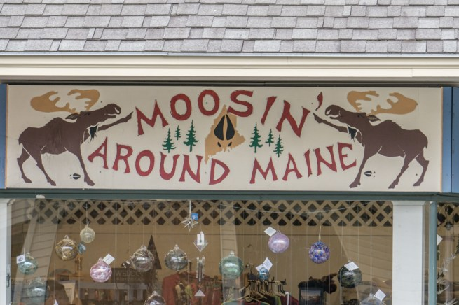 Moose Tour Maine-2