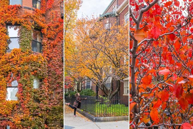 boston-fall-foliage-ete-indien