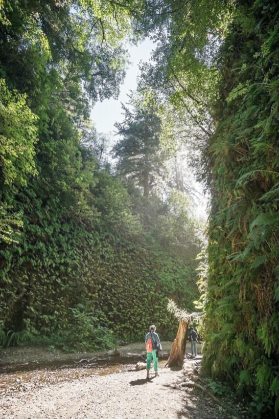 redwood-sequoia-california-27