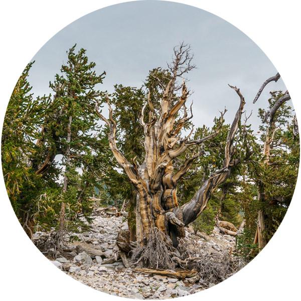 Great Basin National Park Nevada-2