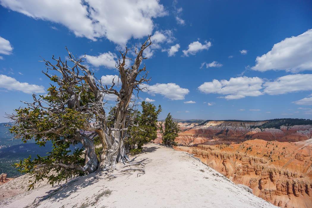 Cedar Breaks National Monument Utah-8
