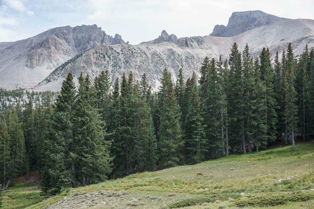 Great Basin National Park Nevada-13