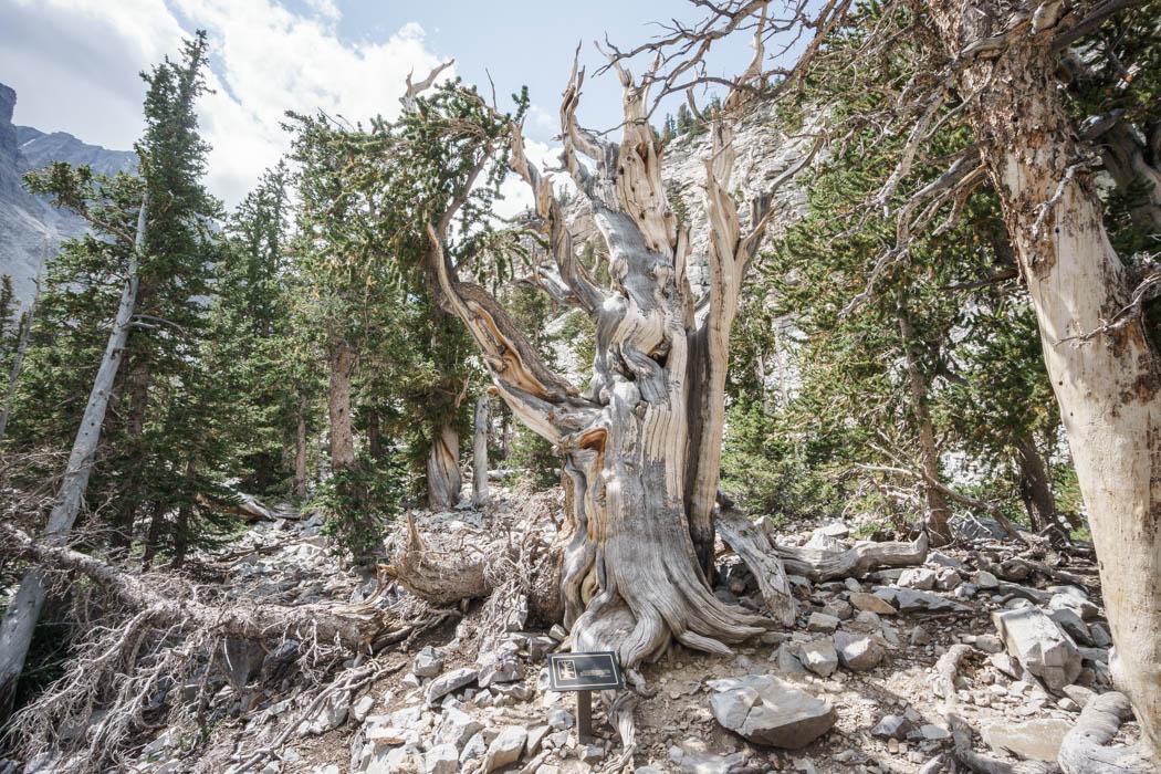 Great Basin National Park Nevada-4