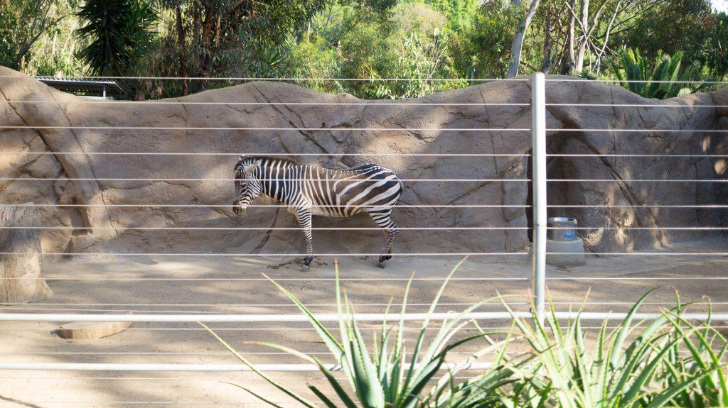 san diego zoo-2