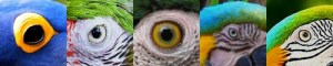 Macaw Facts - Eyes