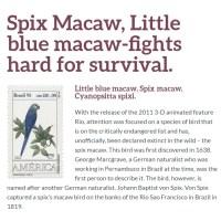 engendered birds macaw spixs spix survival