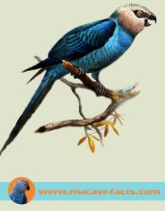 history_pets_macaw-pet-futured_done