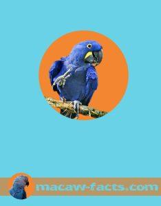 macaw bird blue macaw hyacinth-macaw-hyacinthine-macaw