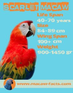 size weight wing span lifespan how long live