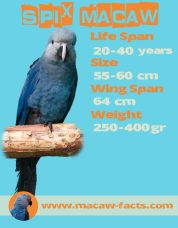 Pet parrot, Little blue macaw, bird animal