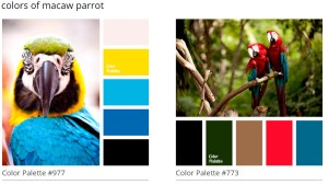 Macaw Parrot Colors