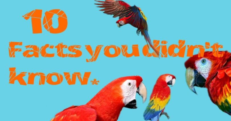 Macaw Parrot Facts For Kids
