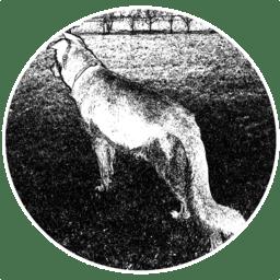 Wolf 1.34.6