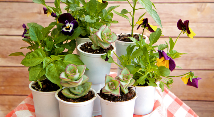 Use K-Cups As Tiny Seed Starters