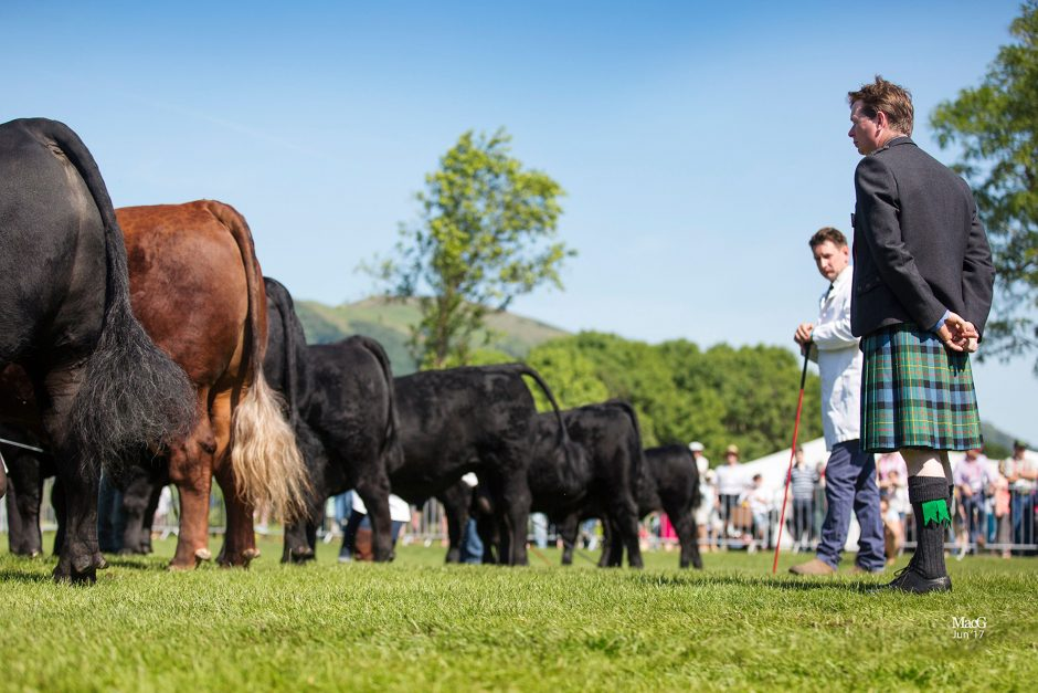 Aberdeen-Angus National Show - Three Counties Show