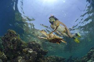 Marsa Alam snorkeling