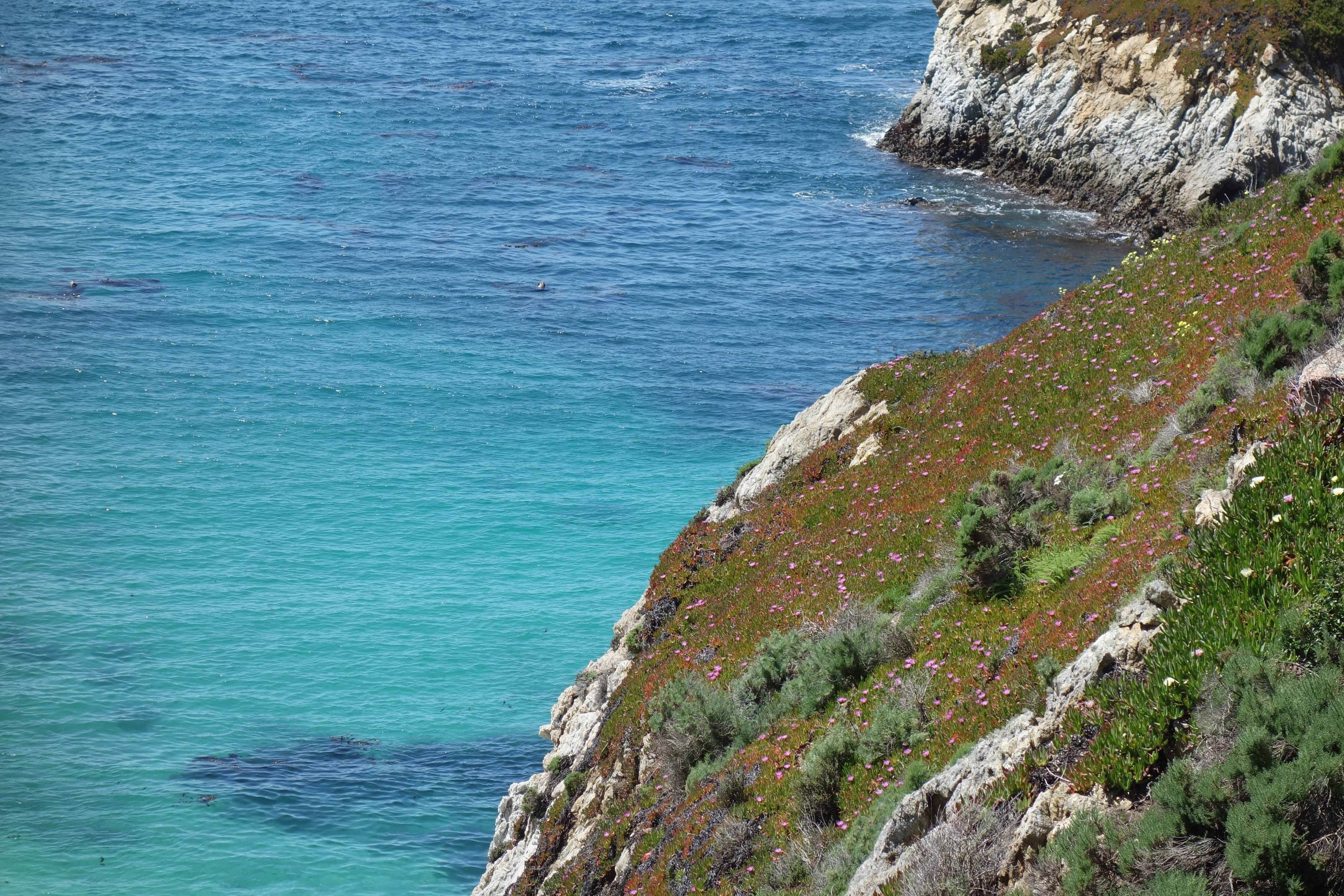 Wild Flower meet the Pacific Ocean Photo Credit: Evelyn Calhoon/M-A Chronicle
