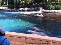 Dauphins en captivité dans un parc marin