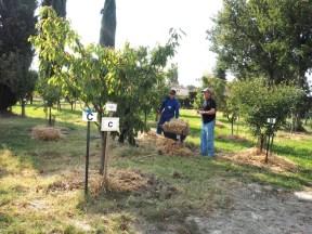 Les Croqueurs de pommes de Provence